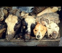 Dog Heads & Cats Used In Nigerian Voodoo Medicine!